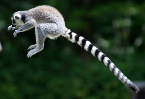 practical search engine optimization tip #2: increase organic search traffic with long-tail keywords